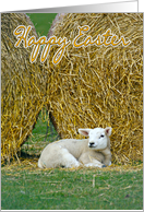Easter Card With Spring Lamb card