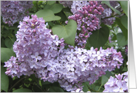 Lilacs and leaves card