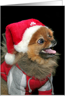 Thank you for the Christmas gift pomeranian card