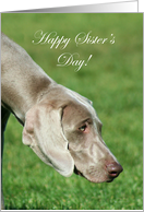 Happy Sister's Day Weimaraner Dog card