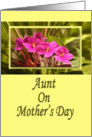 Aunt on Mother's Day - Pink African Violets card