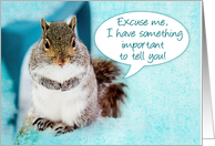Announcement,Close-up of Cute Squirrel Eager to tell Important News card