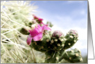 Happy Birthday, Pink Cactus Flower and needles photography card