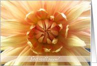 Get well soon, close up orange Dahlia flower photography card
