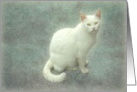 White cat with yellow eyes on background texture card