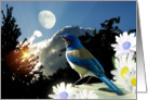 Blue Jay Afternoon card
