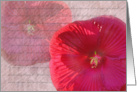 Heavenly Hibiscus card