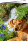 Rusty and the Waterfall card