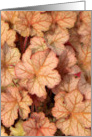 Coral Bell Leaves card