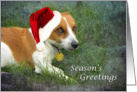 Jack Russell in Christmas Hat card