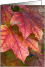 Dreamy Red Leaves in Autumn card