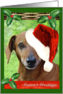 Adorable Dachshund Doggie in Christmas Hat card