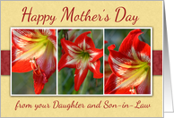 Mother's Day- From Daughter and Son-in-Law-Amaryllis Flowers card