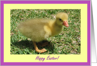 Happy Easter - Duckling card