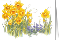 Daffydowndilly - Spring Flowers card