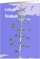 College Graduate Card, Reaching for the Sky card