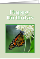 Happy Birthday Female Monarch Butterfly on White Milkweed Flower card