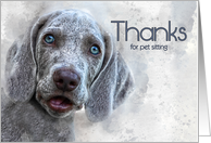 Thanks for Pet Sitting Watercolor Weimaraner Puppy card