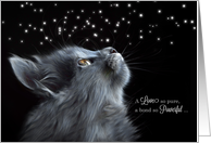 Pet Sympathy Loss of a Cat Black Cat Photograph card