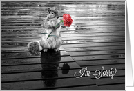 I'm Sorry Squirrel with Carnation Black and White card