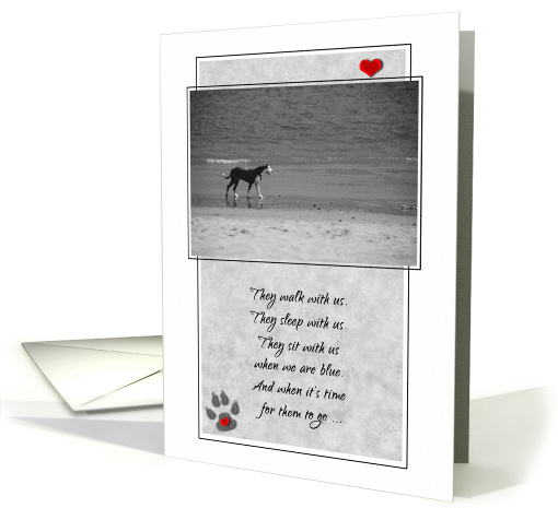 Pet Sympathy Loss of a Dog Black and White Sentimental Beach card