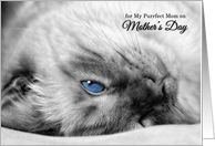 From the Cat on Mother's Day Siamese Photograph card