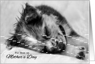 From the Dog on Mother's Day Australian Shepherd Puppy card