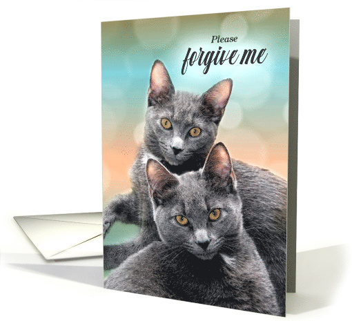 Apology for Cat Lover Two Silver Tabby Cats card (432087)