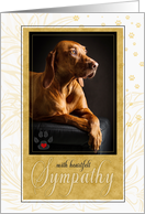 Pet Sympathy Loss of or Terminally Ill Dog in Yellow Golds card