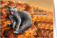 Welcome Home from the Pet Funny Gray Cat on a Pillow card