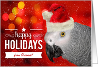 from Hawaii African Gray Parrot Custom Holidays card