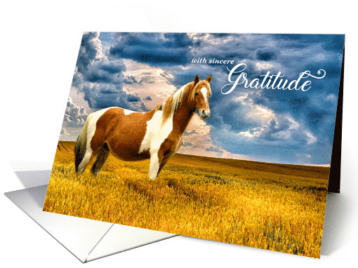 Thank You Western Sepia White Horse in a Meadow Blank card (763789)