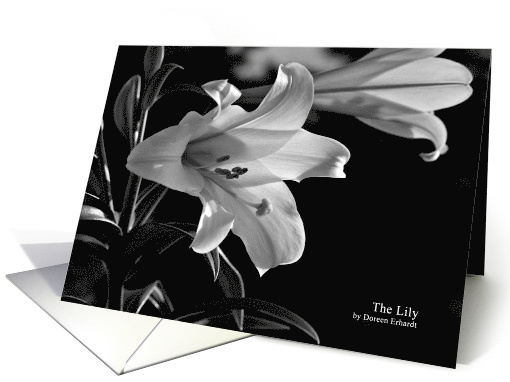 Lily Flower Black and White Photograph Blank Any Occasion card