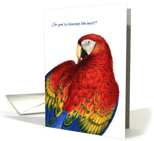 Farewell and Good Luck Rainbow Macaw Parrot card (958665)