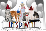 Funny Cats Birthday Party Invitation in Red Blue and Yellow card