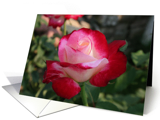 Note Card, Romantic White and Red Rose card (858136)