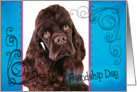 Friendship Day card featuring a chocolate American Cocker Spaniel card