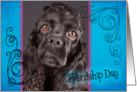 Friendship Day card featuring a black American Cocker Spaniel card