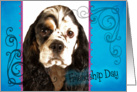 Friendship Day card featuring a parti American Cocker Spaniel card