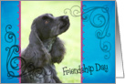 Friendship Day card featuring a blue roan English Cocker Spaniel card