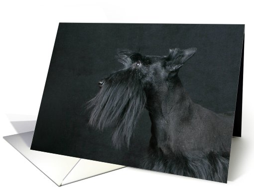 Jacquie the Scottish Terrier Puppy card (443810)