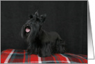Jacquie the Scottish Terrier Puppy card