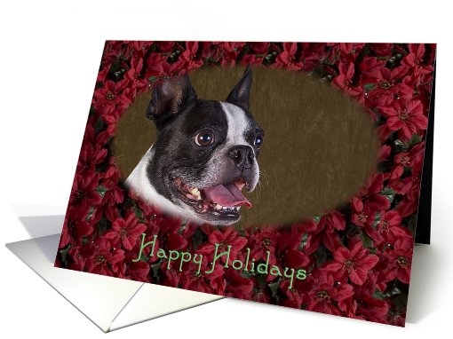 Happy Holidays - featuring a Boston Terrier surrounded by... (728371)