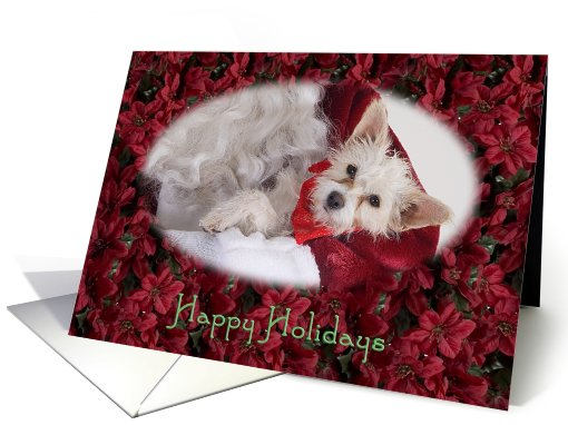Happy Holidays - featuring Terrier Mix surrounded by Poinsettias card