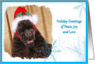 Holiday Greetings, chocolate American Cocker Spaniel surrounded by blue snowflakes card