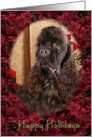 Happy Holidays - chocolate American Cocker Spaniel surrounded by Poinsettias card
