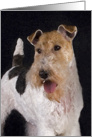 Greeting Card - featuring artwork of a Wire Fox Terrier card