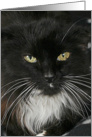 Greeting Card - featuring a DLH tuxedo cat with green eyes. card