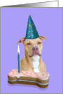 Birthday Card featuring an American Staffordshire Terrier card