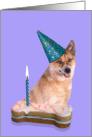 Birthday Card featuring a red Australian Cattle Dog card